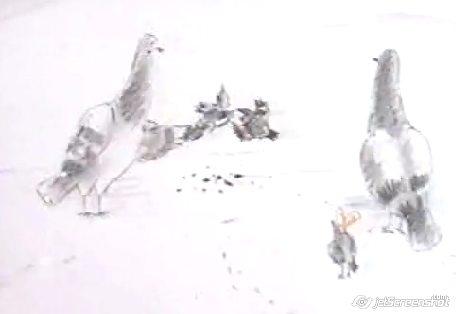воробьи - дети голубей